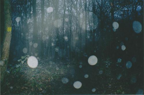 printre copacii cerului inourat